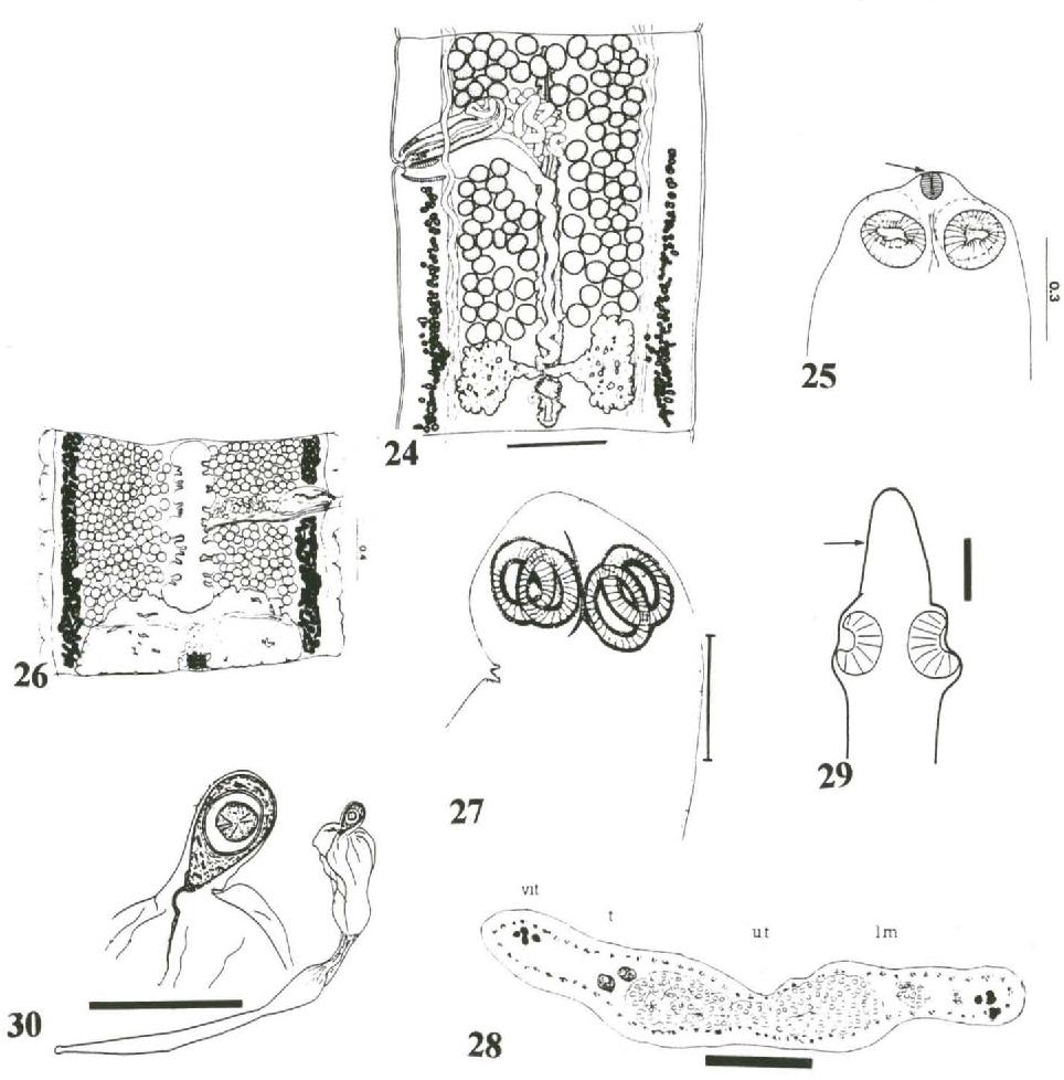 figure 24-30