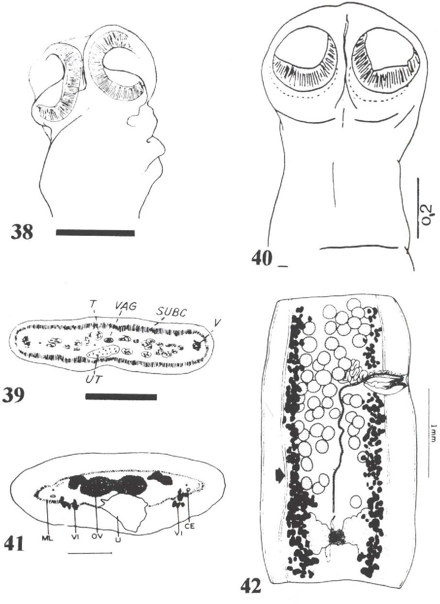figure 38-42