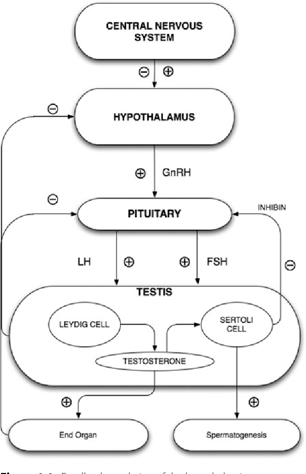 Figure 1 1 from Functional anatomy of the hypothalamic