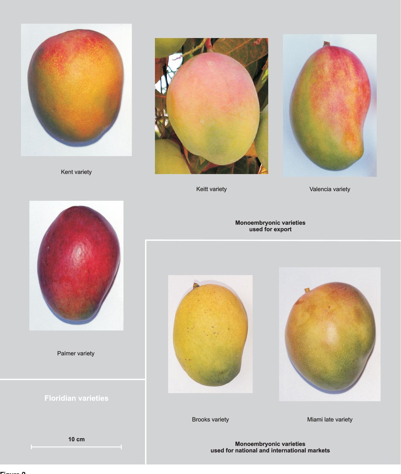dernières conceptions diversifiées dernier style de 2019 site professionnel Figure 2 from The mango in French-speaking West Africa ...