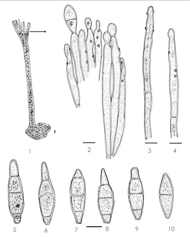 figure 174