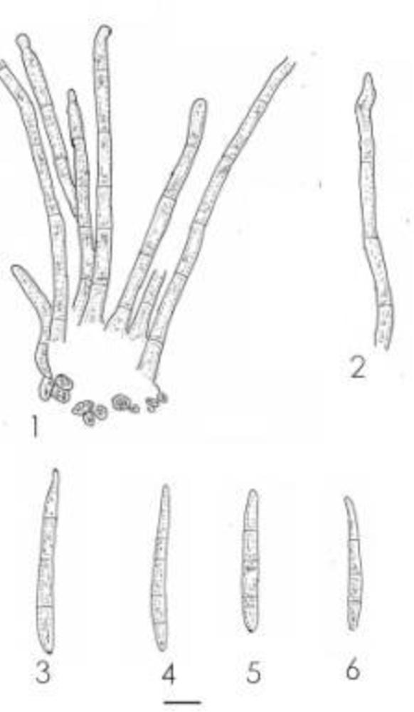 figure 82