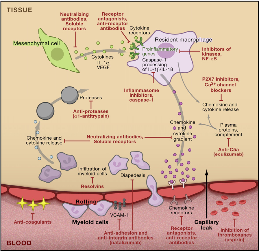 Figure 1. Inflammation and Points of Inhibition by Anti-inflammatory Agents