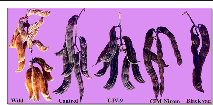 Figure 3 from Analyzing trichomes and spatio-temporal