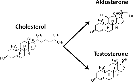 Aldosterone And Testosterone Two Steroid Hormones Structurally Related But With Opposite Electrophysiological Properties During Myocardial Ischemia Reperfusion Semantic Scholar
