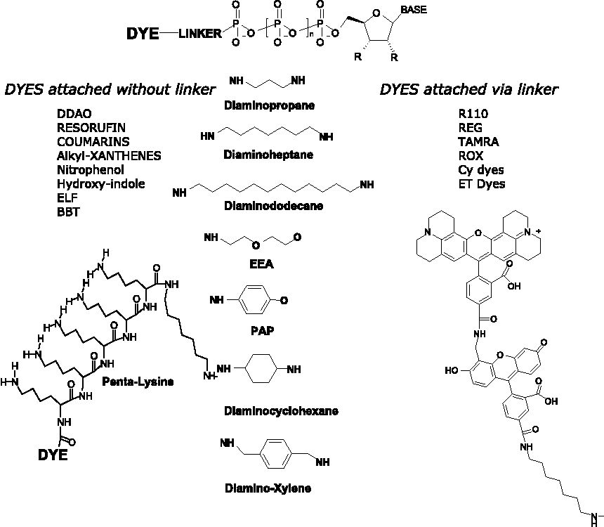 Terminal phosphate labeled nucleotides: synthesis