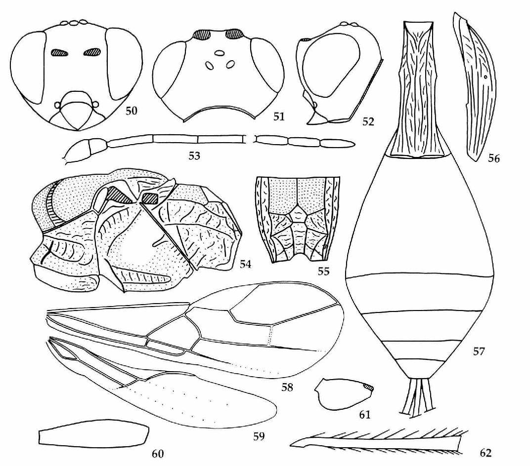 figure 50-62
