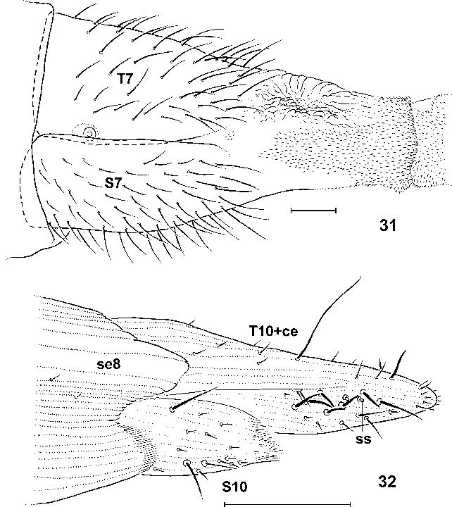 figure 31–32