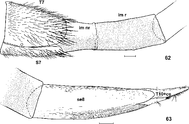 figure 62–63