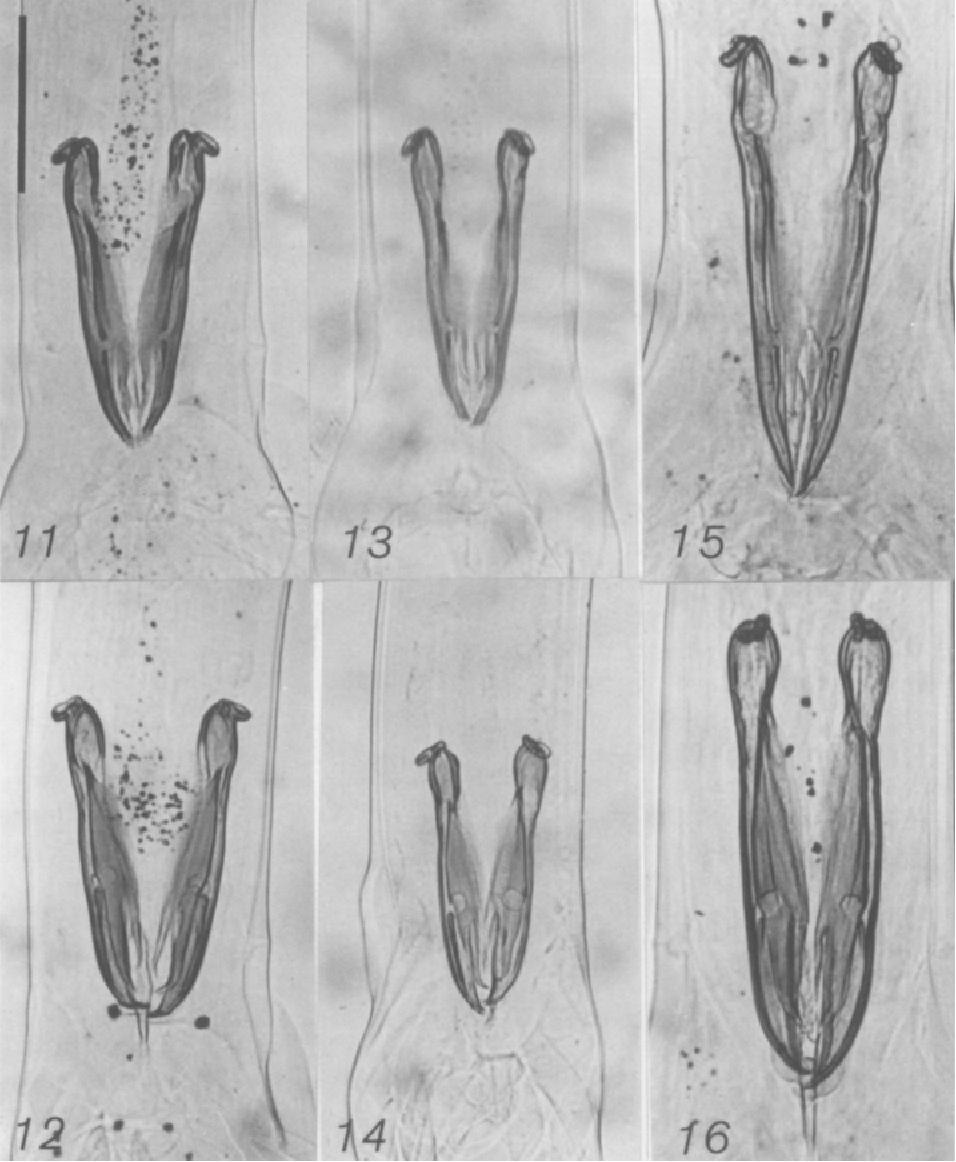 figure 11-16