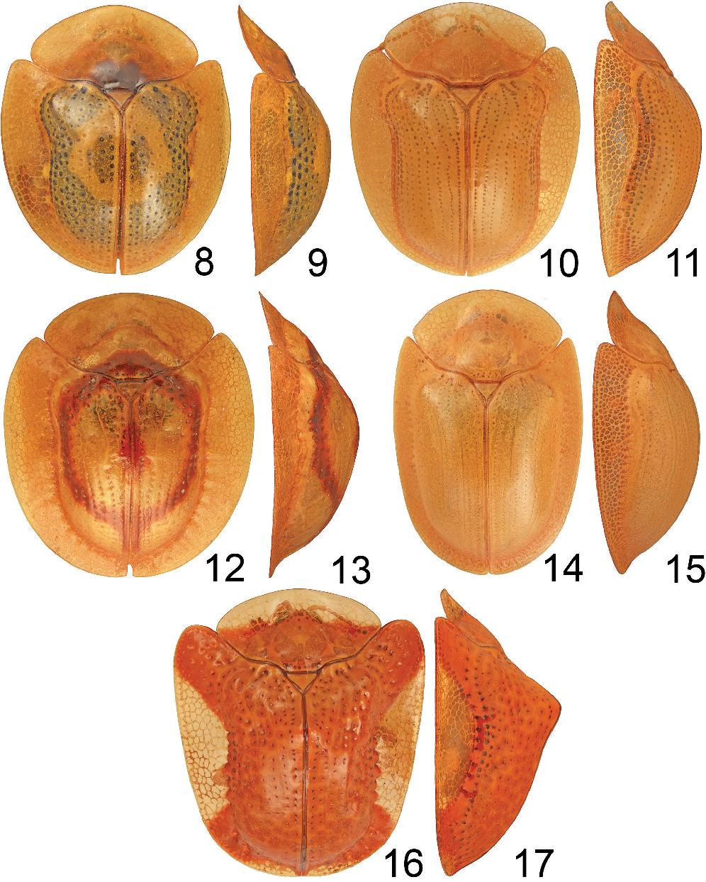 figure 8–17
