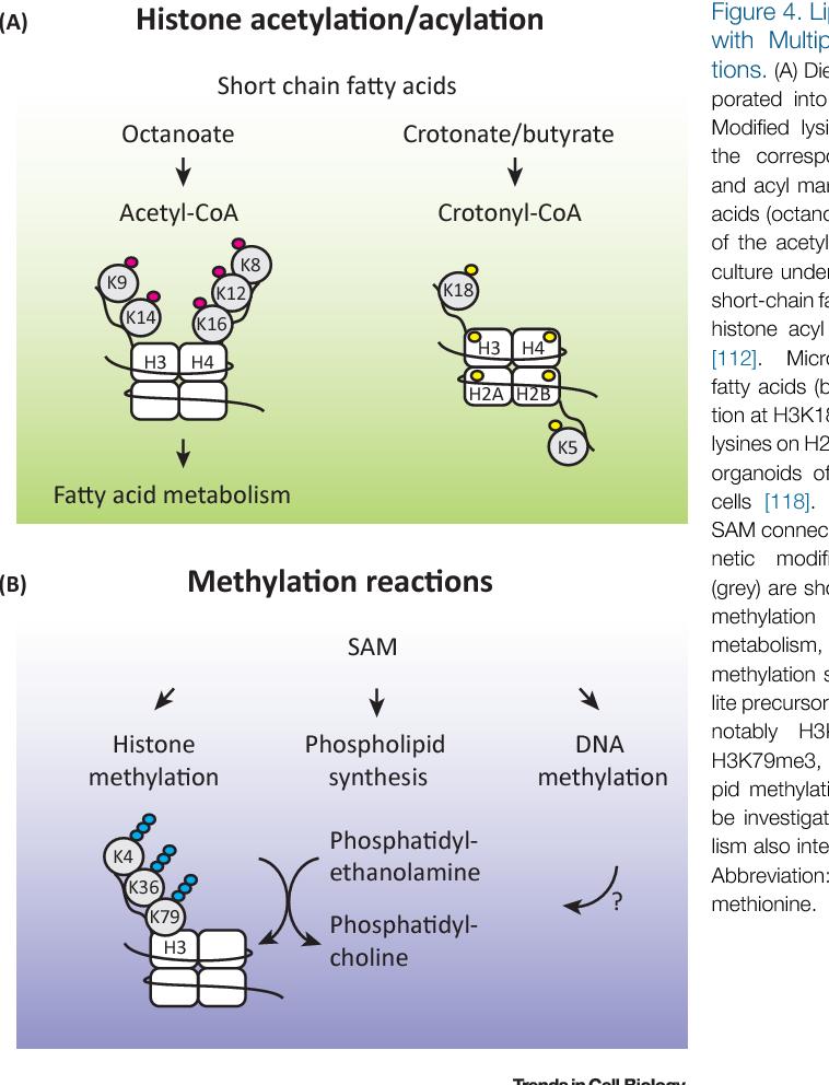 Modification of Lipid Metabolism