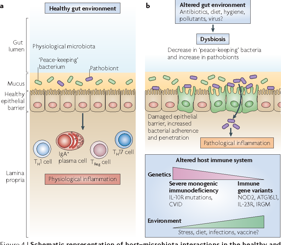 Figure 4 from The immune system and the gut microbiota: friends or on