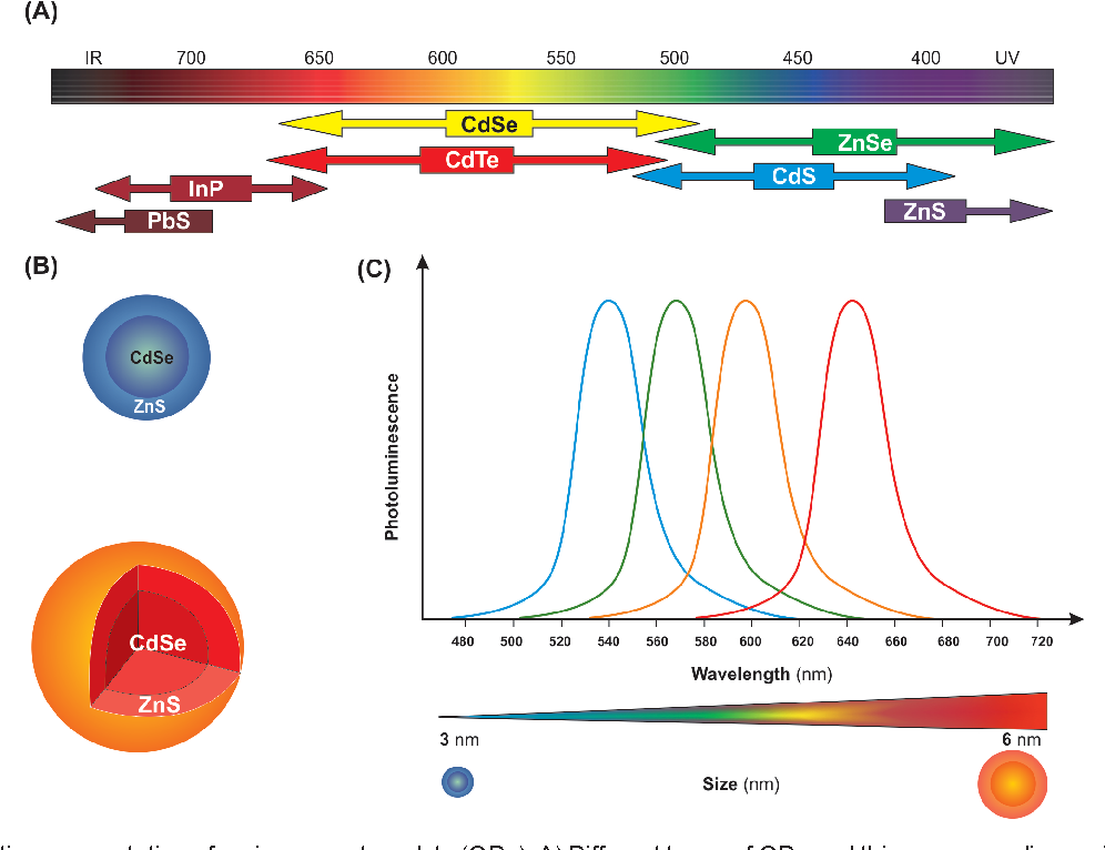 PDF] Impacts of quantum dots in molecular detection and bioimaging of  cancer   Semantic Scholar