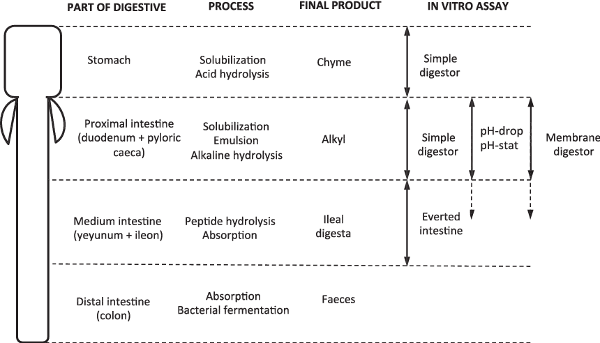 Figure 1 from Application of in vitro digestibility methods