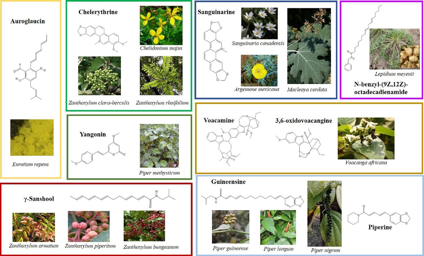 Cannabimimetic plants: are they new cannabinoidergic