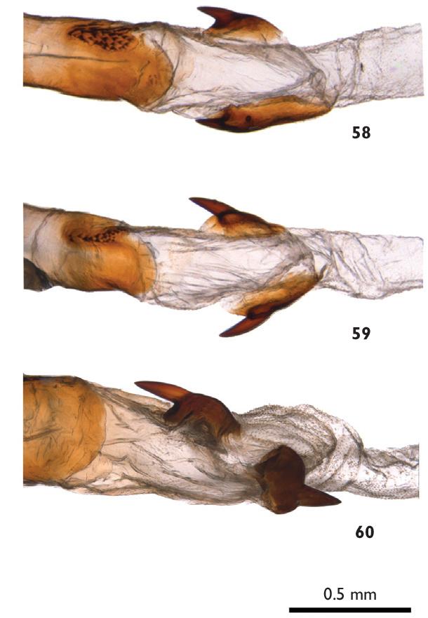 figure 58–60
