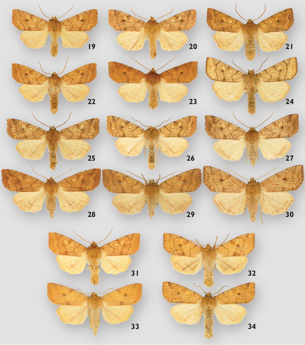 figure 19–34