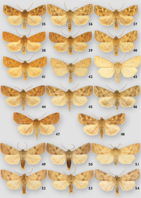 figure 35–54