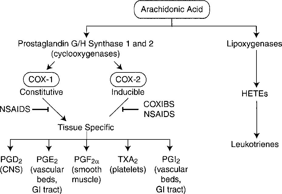 Chronic inflammation and pathogenesis of GI and pancreatic