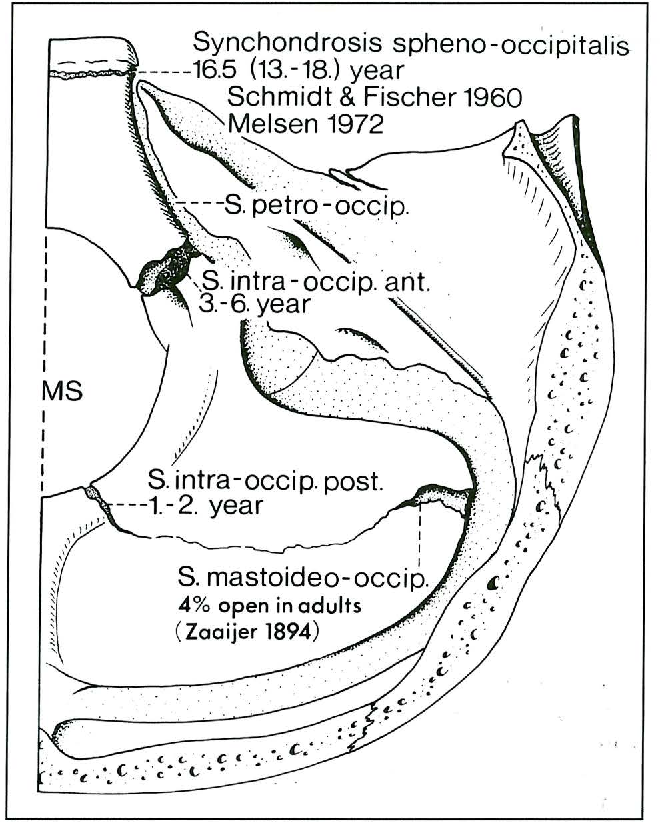 Anatomy Of The Posterior Skull Base Semantic Scholar Lateral tip of lesser wing to midline of synchondrosis intrasphenoidalis. semantic scholar