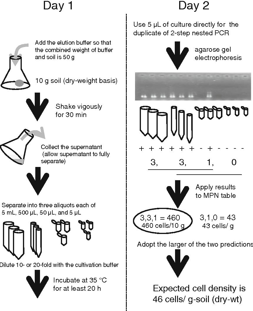 Figure 1 from Sensitive quantitative detection of Ralstonia