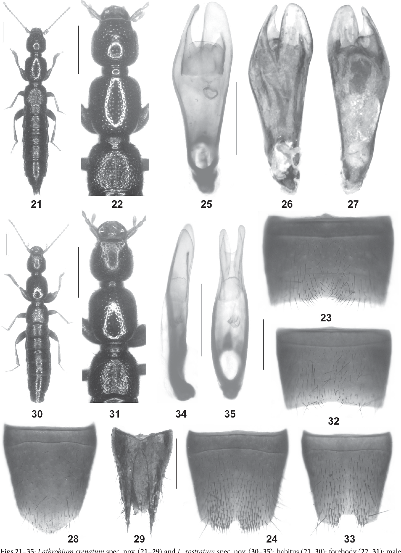figure 21–35