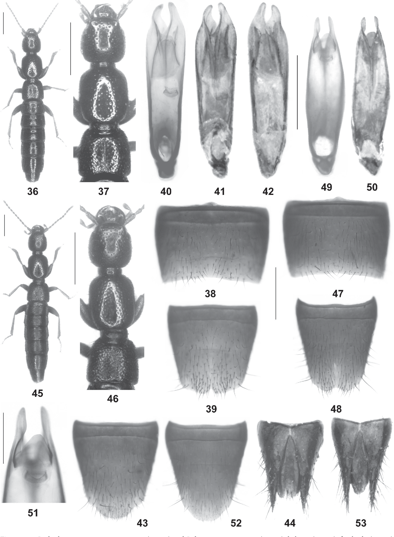 figure 36–53