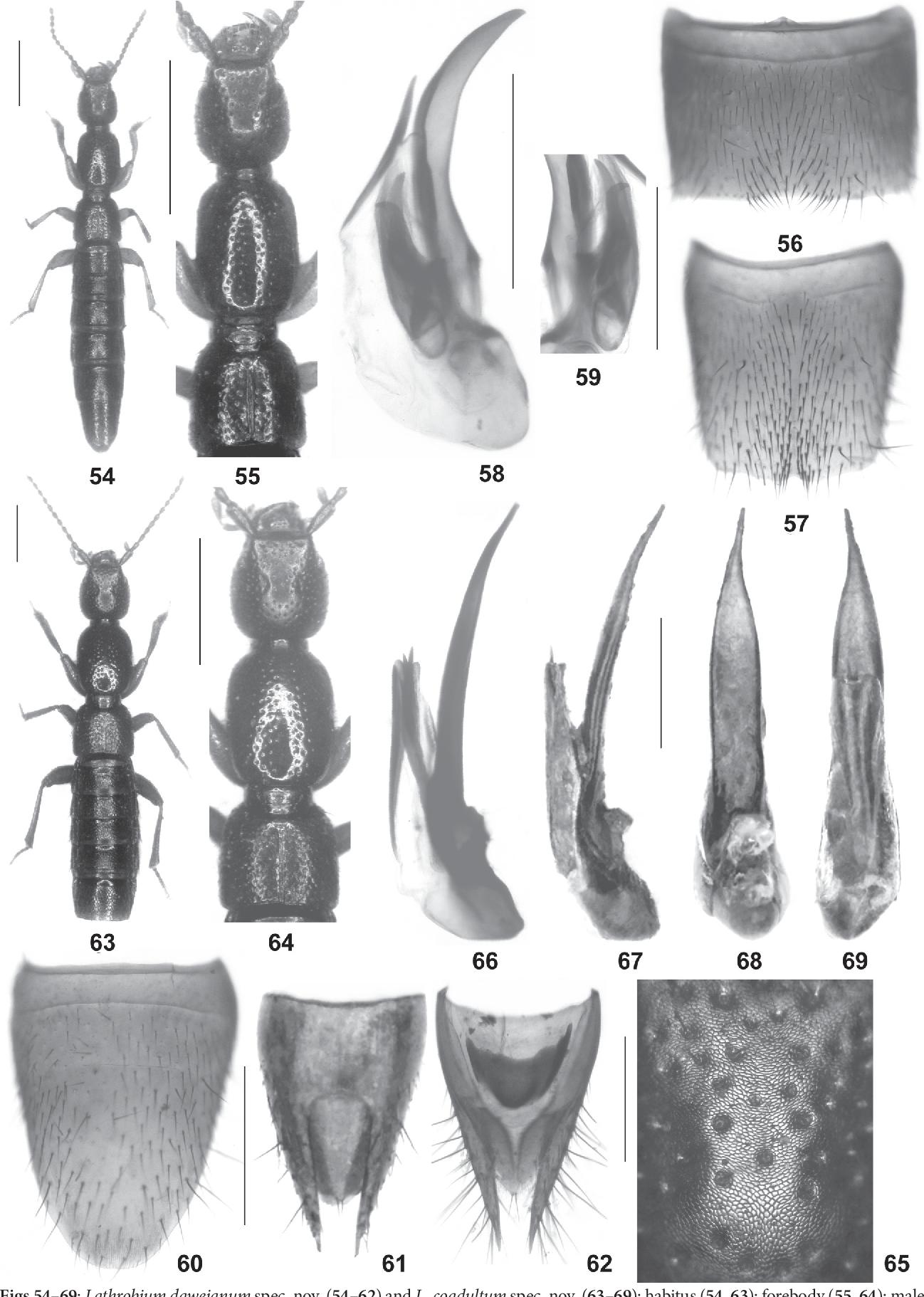figure 54–69