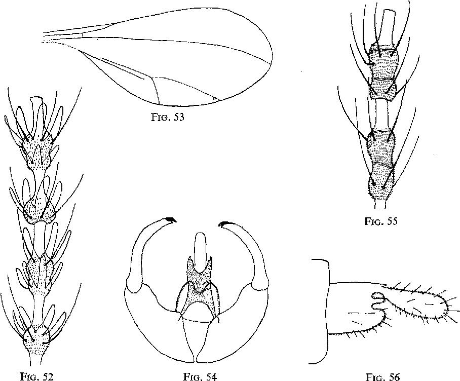 figure 55