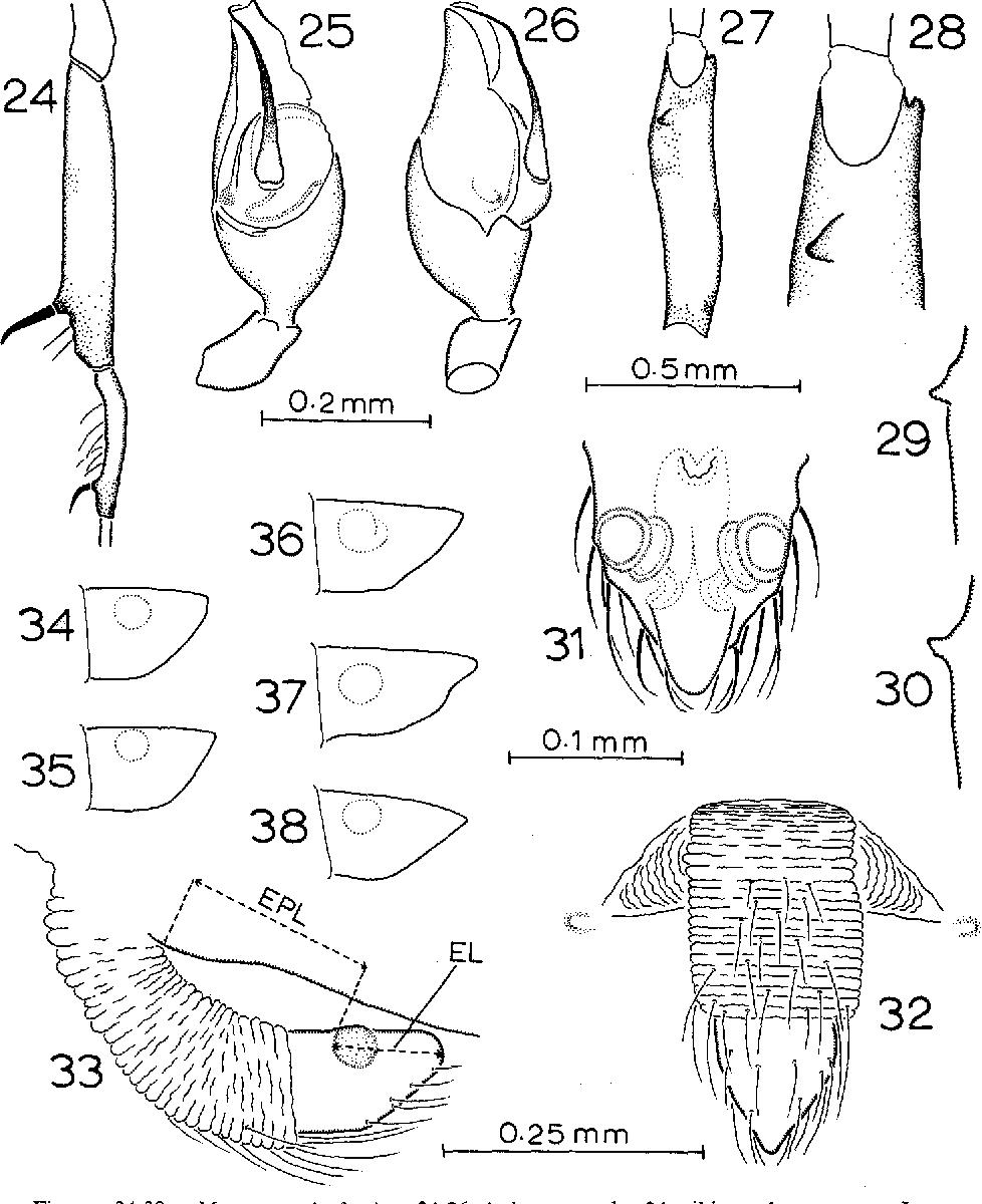 figure 24-38