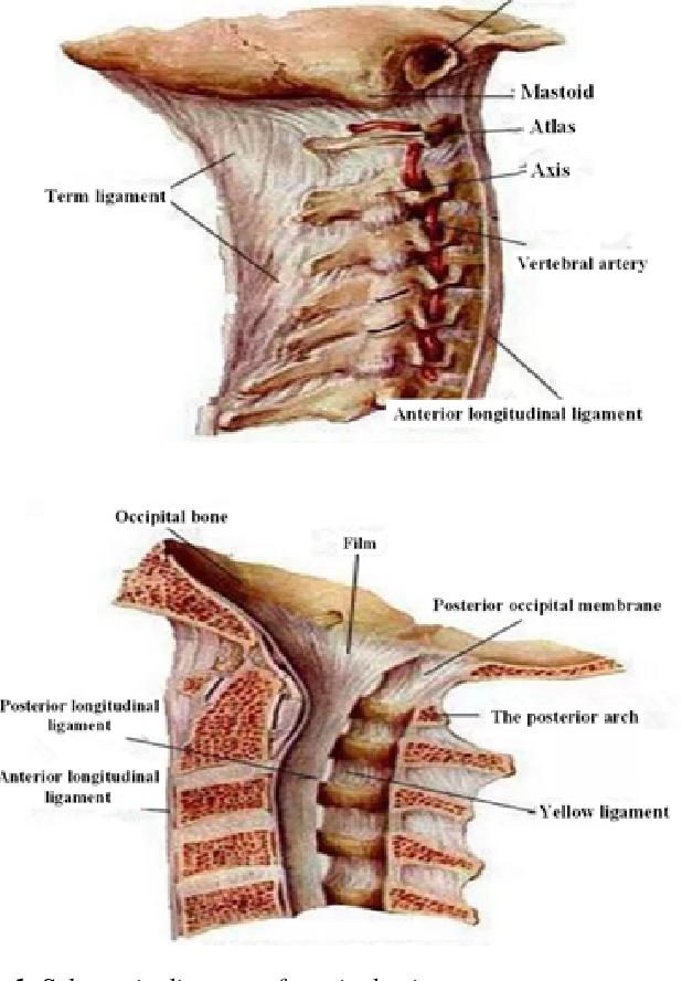 figure 1 from the reliability of mri diagnosis of anterior and Spine Diagram Bones