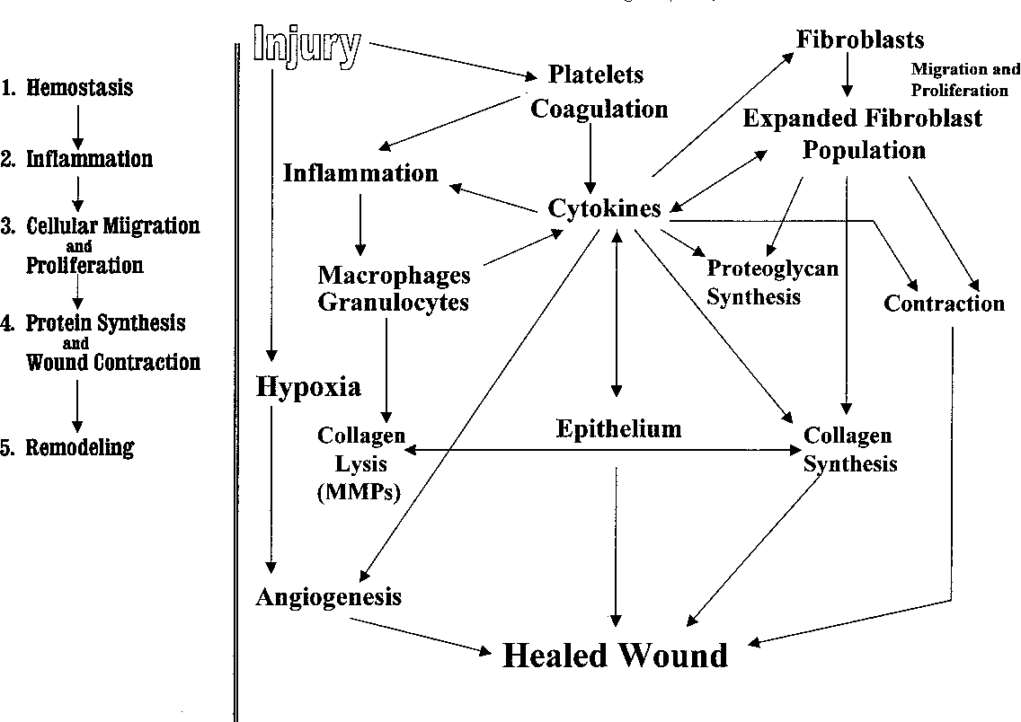 Acute wound healing an overview  - Semantic Scholar