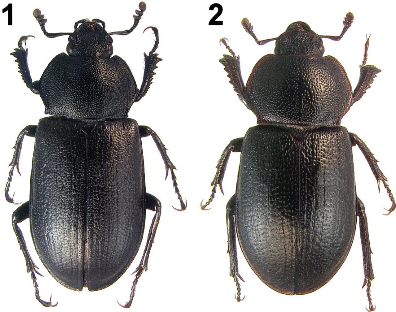 figure 1–2