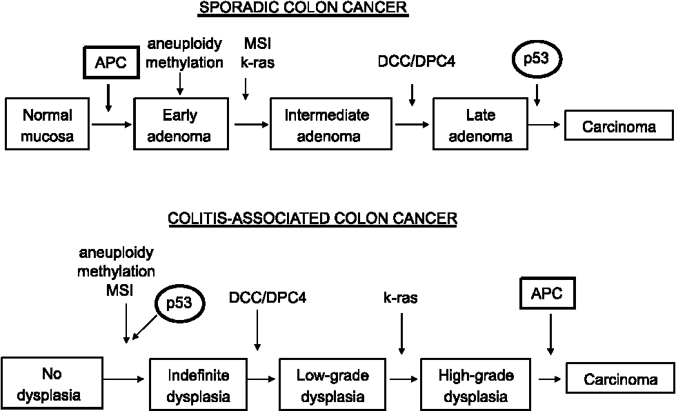 Figure 1 From Colorectal Cancer In Inflammatory Bowel Disease Semantic Scholar