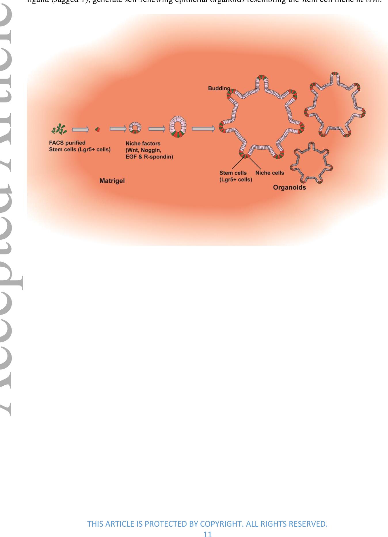 Figure 2 From The Regulatory Niche Of Intestinal Stem Cells Semantic Scholar
