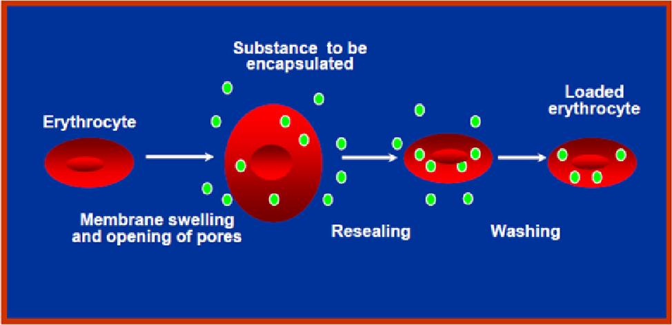 PDF] Resealed Erythrocytes : As a Specified tool in Novel Drug ...