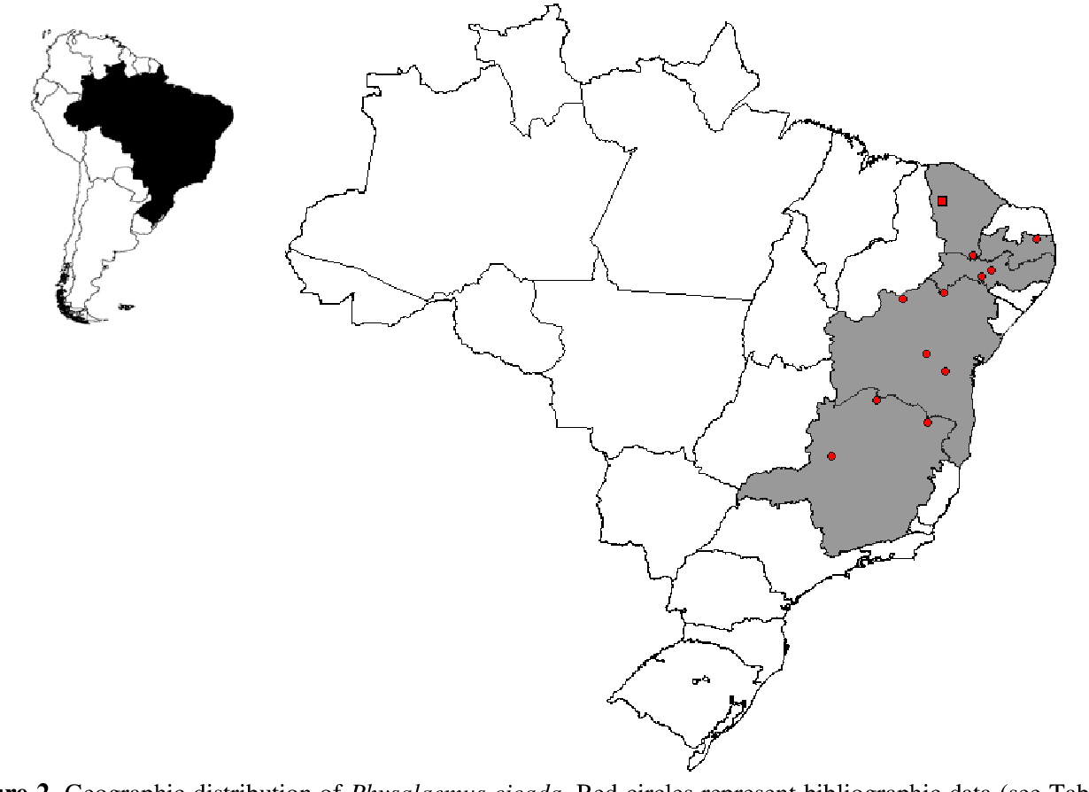 Pdf Amphibia Anura Leiuperidae Physalaemus Cicada Distribution Extension In The State Of Ceara Brazil Semantic Scholar