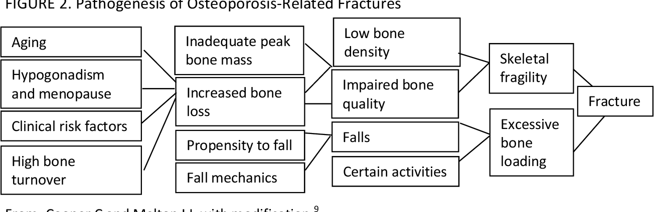 31++ Nof clinicians guide to prevention and treatment of osteoporosis information