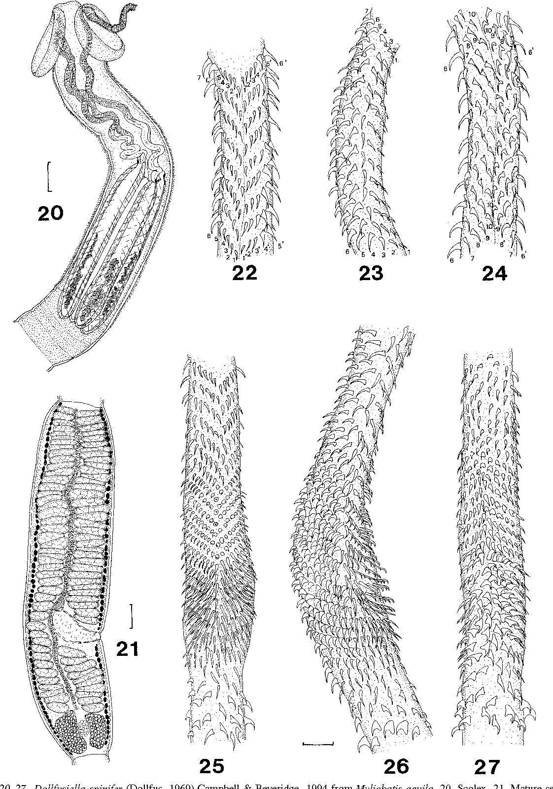 figure 20–27