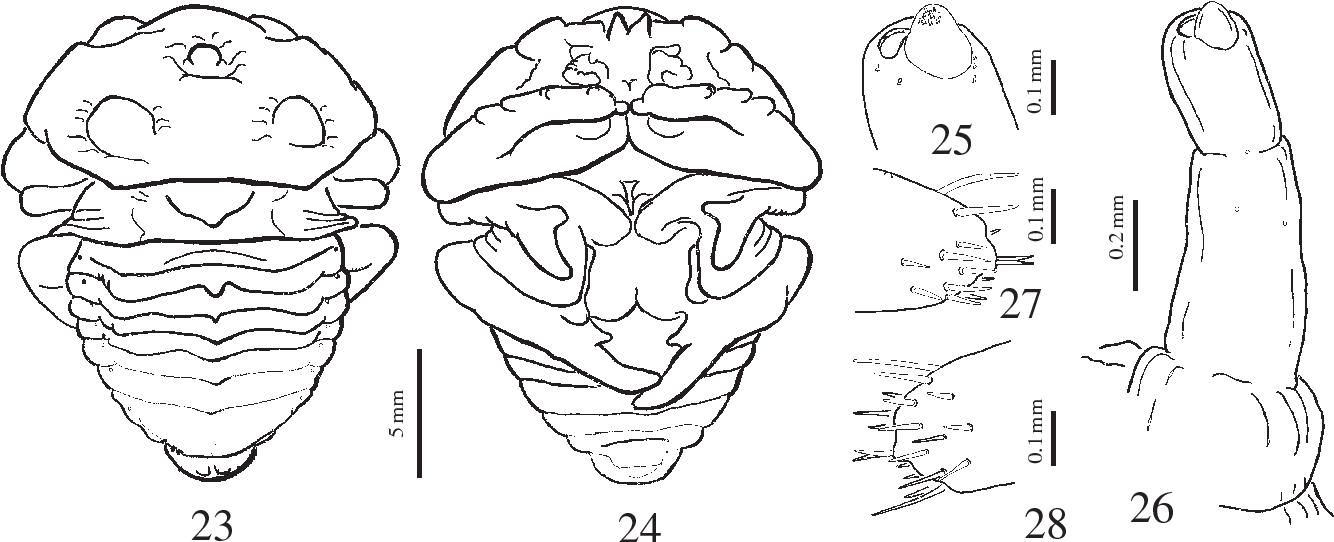 figure 23–28