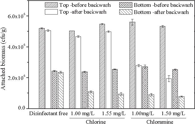 Evaluation of backwash strategies on biologically active