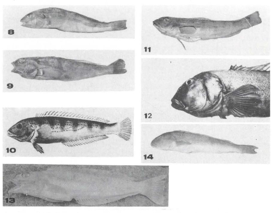 figure 8-14