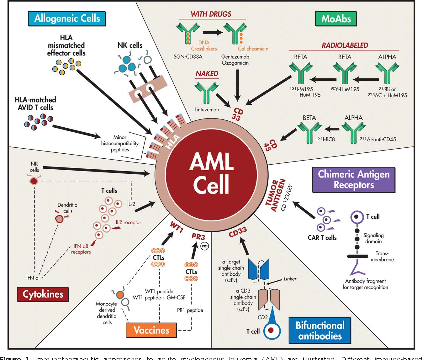 Figure 1 from Immunotherapy in acute myeloid leukemia