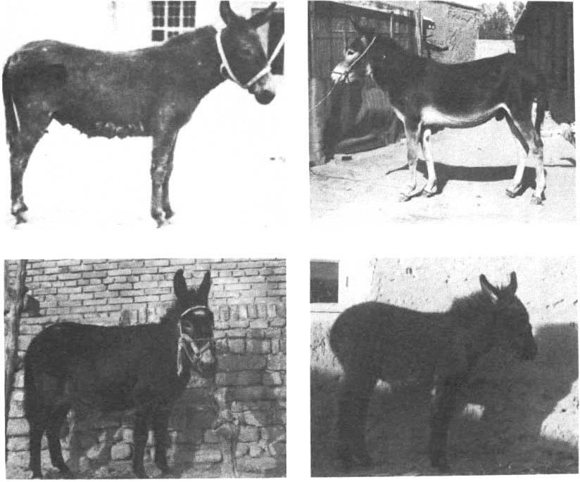 figure 16—19