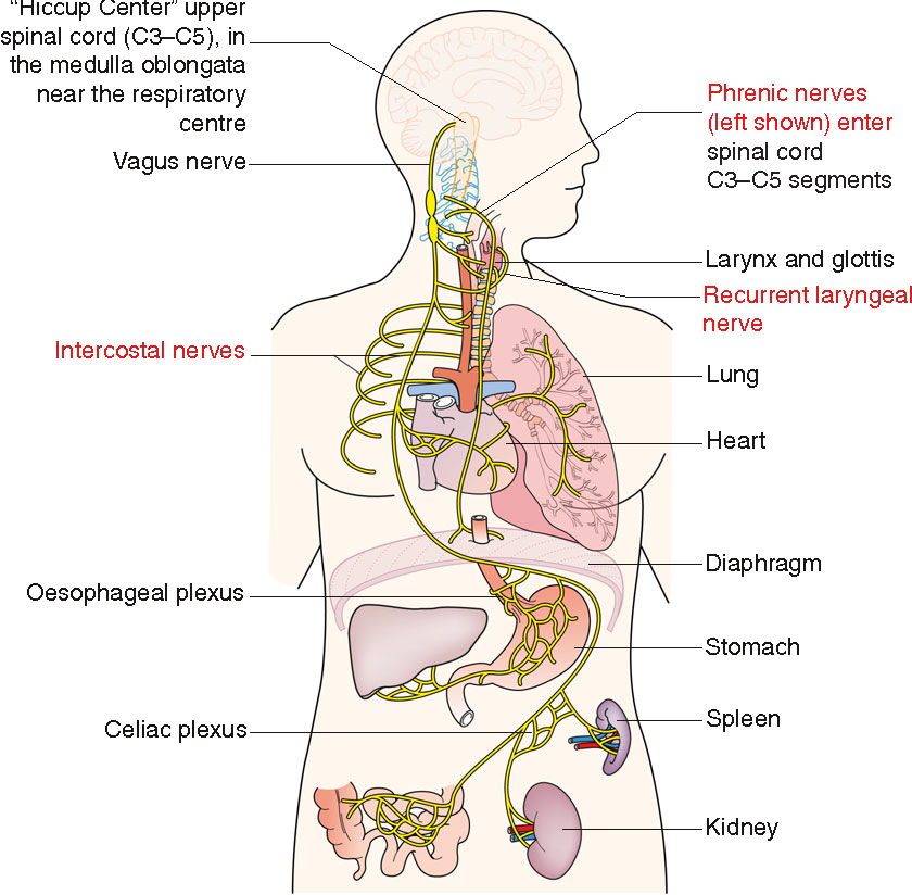 Figure 1 from Systemic review: the pathogenesis and