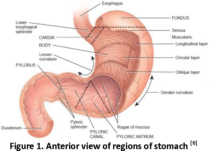 Figure 1 from A review on Gastroretentive Drug Delivery