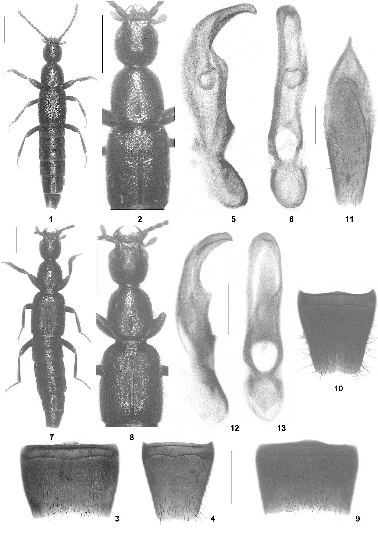 figure 1‑13