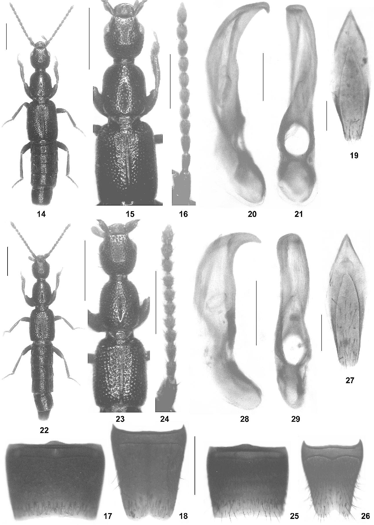 figure 14‑29