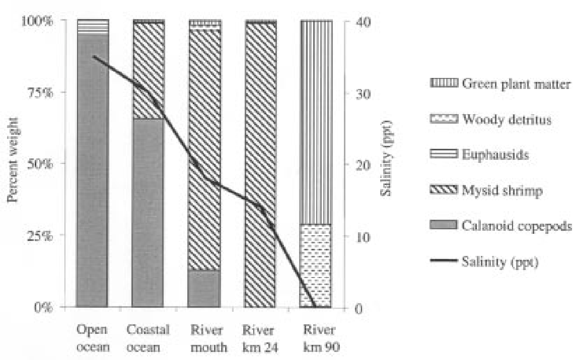 Figure 2 from Feeding behavior of American shad during